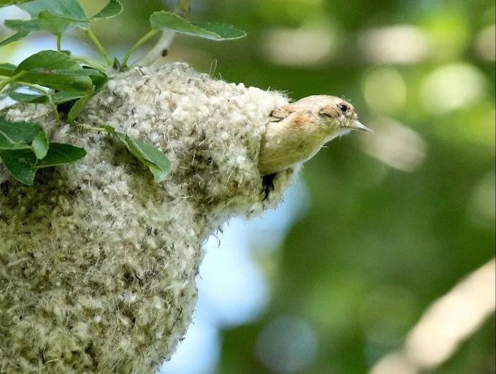 Құрқылтайдың ұясы